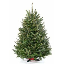 2.5' - 3' Green Fir Freshly Cut Christmas Tree with Stand