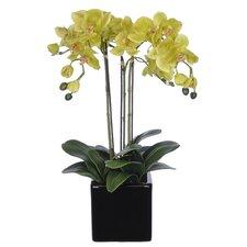Orchid Arrangement in Cube Ceramic Vase