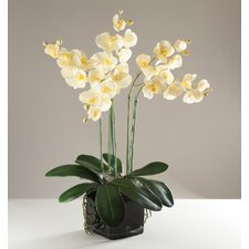 Kunstpflanze Phalaenopsis Orchidee in Vase