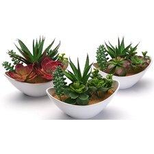 6-tlg. Schreibtisch-Topfpflanze