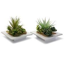 Schreibtisch-Topfpflanze