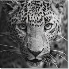 King of the Savannah Photographic Print