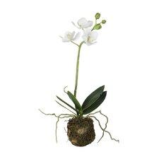 Dekorative Pflanze