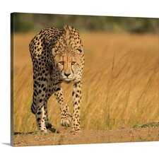 Focused Intensity by Jaco Marx Photographic Print on Canvas