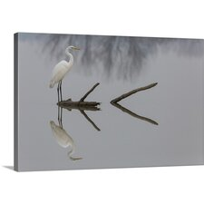 Reflections by Mauro Montuori Photographic Print on Canvas