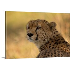 Tears of a Cheetah by Ashley Vincent Photographic Print on Canvas