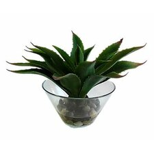 Natrual Agave Desk Top Plant in Vase