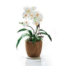 Kunstpflanze Orchidee Rusty