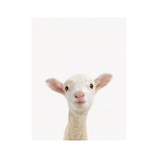 Little Darlings Lamb by Sharon Montrose Photographic Print