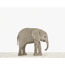 Baby Animals 'Baby Elephant' by Sharon Montrose Photographic Print