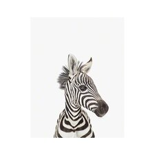 Little Darlings Baby Zebra by Sharon Montrose Photographic Print