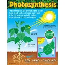 Photosynthesis Grade 4-8 Book (Set of 3)