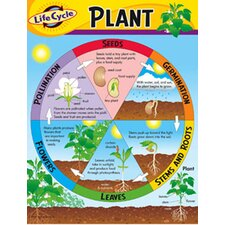 Life Cycle of A Plant Chart (Set of 3)