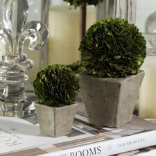 2 Piece Boxwood Round Topiary in Pot Set