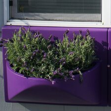 Ballavaz Novelty Window Box