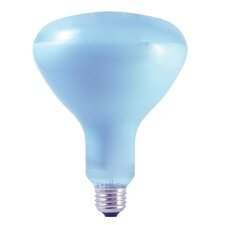 65W 120-Volt (2650K) R40 Light Bulb (Set of 2)