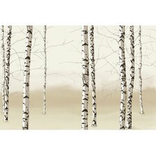 Modern Murals Birch Trees Wall Mural
