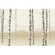 Modern Murals Birch Trees Wall Mural