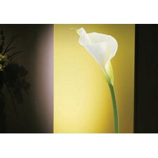 Foto Calla Lily Wall Decal