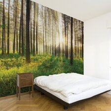 Multi Sunbeam Wall Mural