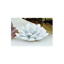 Bisque White Porcelain Succulent