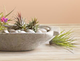 Air Plants - Tillandsias, Vase Decor & More on Joss and Main