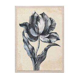 Sieger Tulip II