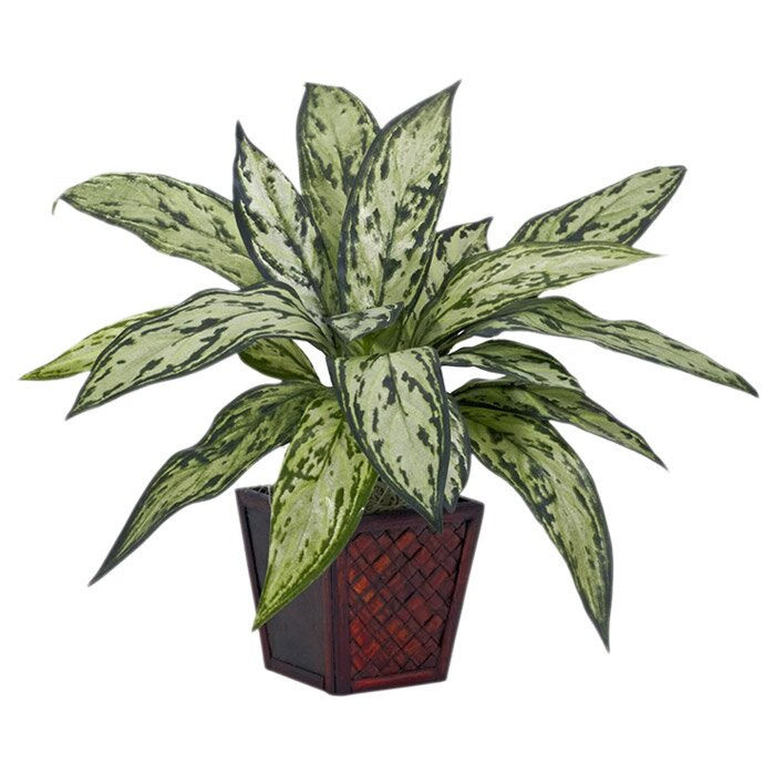 Desk Top Plant in Pot
