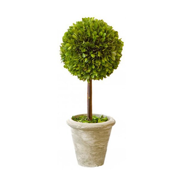 Box Single Topiary In Pot