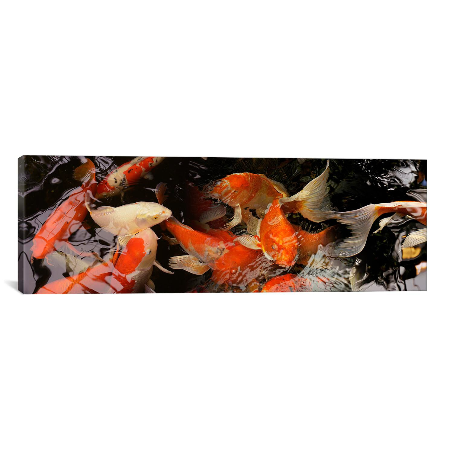 Icanvas panoramic 39 koi carp 39 photographic print on canvas for Koi carp wall art