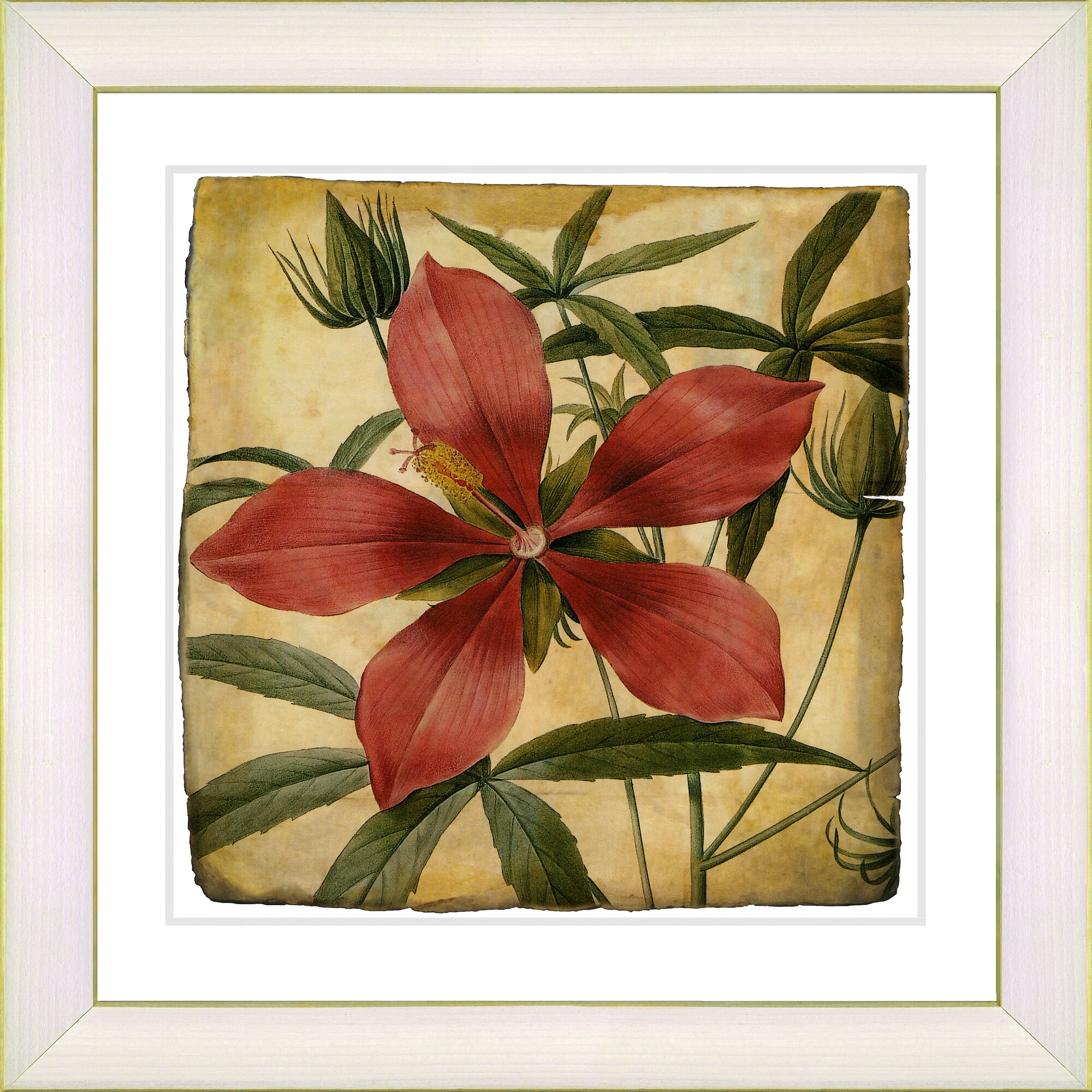 Wall Art All Modern : Studio works modern vintage botanical no a by zhee