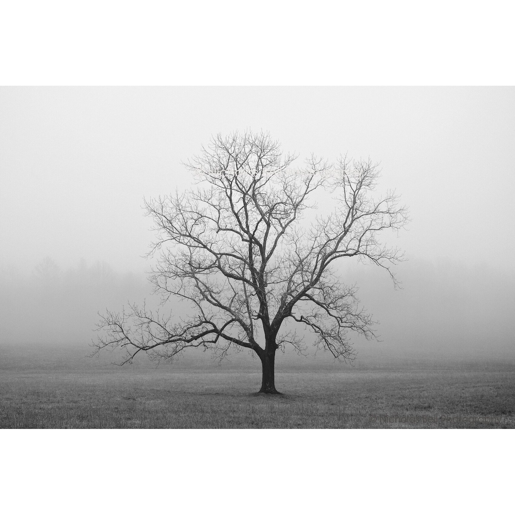 Zatista Limited Edition 'Velvet Sunrise' by Nicholas Bell Photographi...