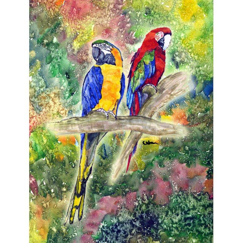 Parrot Parrots Jimmy buffett