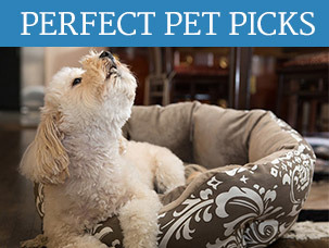 Perfect Pet Picks