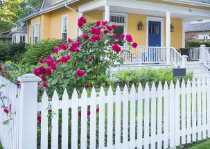 A Yard with Curb Appeal
